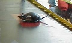 Robo-Rat